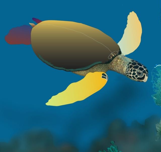 Sea Turtle Epiphany