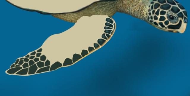 The lost flipper